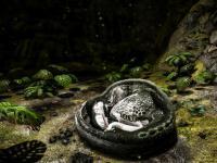 capture du jeu : Ark Survival Evolved_16